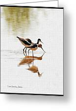 Stilt And Avocet Eat Together Greeting Card
