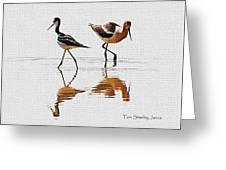 Stilt And Avocet Share The Pond Greeting Card