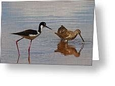 Stilt And Dowitcher  Greeting Card