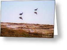 Stilt Birds Greeting Card