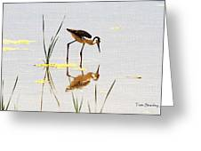 Stilt Chick Looking For Food Greeting Card