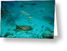 Stingray And Fish Greeting Card