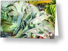 Stippled Cactus Greeting Card