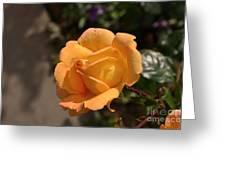 Stirling Rose Greeting Card