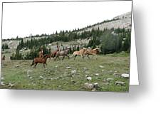 Stock Wrangling In Greeting Card