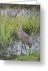 Stoic Sandhill Greeting Card