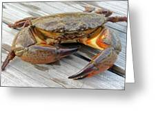 Stone Crab Baby Greeting Card