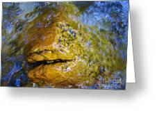 Stone Fish Greeting Card