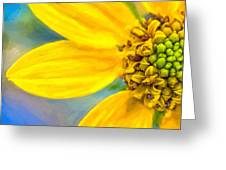 Stone Mountain Yellow Daisy Details - North Georgia Flowers Greeting Card