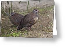 Stone Partridges Greeting Card