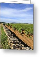 Stone Wall. Vineyard. Cote De Beaune. Burgundy. France. Europe Greeting Card
