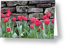 Stoned Tulips Greeting Card