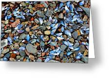 Stones And Seashells Greeting Card