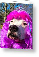 Stop Bsl Officer Do You Hate Me Because I'm A Pit Bull Or Cause I'm A Dude Wearing A Pink Tiara? Greeting Card by Q's House of Art ArtandFinePhotography