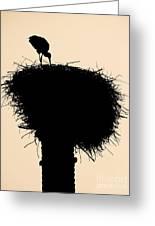 Stork Greeting Card