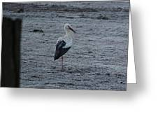 Stork On A Frosty Morning Greeting Card