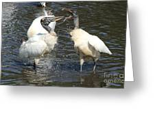 Stork Squabble Greeting Card