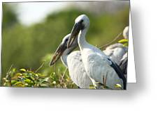 Storks Nesting In The Treetops Greeting Card