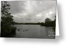 Storm In A Duck Pond Greeting Card