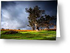 Storm Onto A Vineyard Greeting Card by Boon Mee