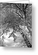 Storm Over The Cottonwood Trees - Black And White Greeting Card