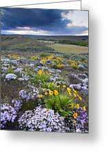 Storm Over Wildflowers Greeting Card