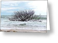 Storm Tide Greeting Card
