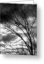 Stormy Beauty Greeting Card by Candice Trimble