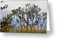 Stormy Marsh Cedar Tree Greeting Card