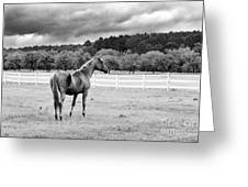 Stormy Pasture Greeting Card by Scott Hansen
