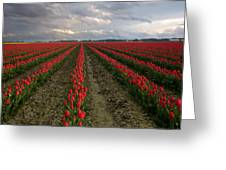 Stormy Red Tulips Greeting Card
