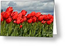 Stormy Reds Greeting Card