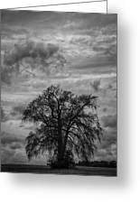 Stormy Tree Greeting Card