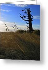 Stormy Walk On The Beach IIi Long Beach Wa Greeting Card