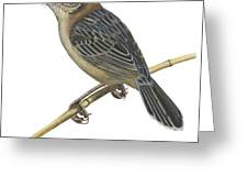 Stout Cisticola Greeting Card
