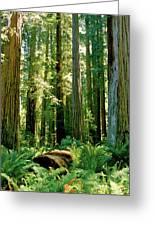 Stout Grove Coastal Redwoods Greeting Card