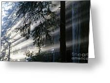 Stout Grove Redwoods With Sunrays Breaking Through Fog Greeting Card