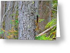 Straight Tail Squirrel Greeting Card