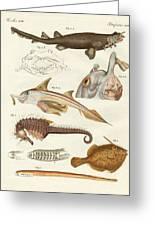 Strange Cartilageous Fish Greeting Card