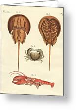 Strange Crabs Greeting Card
