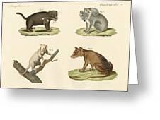Strange Marsupials Greeting Card