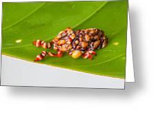 Strange Moth Greeting Card