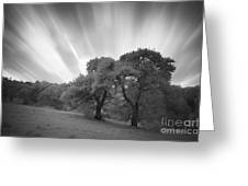 Strange Trees On Meadow Greeting Card