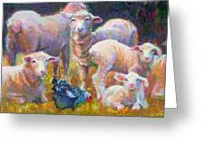 Stranger At The Well - Spring Lambs Sheep And Hen Greeting Card