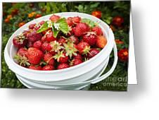 Strawberry Harvest Greeting Card