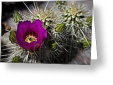 Strawberry Hedgehog  Greeting Card