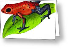 Strawberry Poison-dart Frog Greeting Card