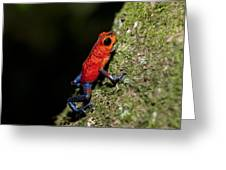 Strawberry Poison Frog Greeting Card