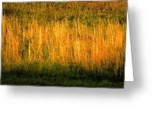 Straw Landscape Greeting Card