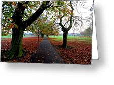 Stray Beauty In Autumn No 2 Greeting Card